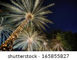 Palm Trees Decorated With...