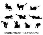 cat vector. collection of cat... | Shutterstock .eps vector #165920093