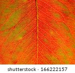 sun shines trough an autumn leaf | Shutterstock . vector #166222157