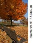 bench under tree in the fall | Shutterstock . vector #16630258