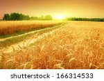 Wheat Field And Sunset.