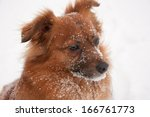 rimy brown dog in winter time. | Shutterstock . vector #166761773