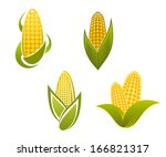 yellow corn icons and symbols... | Shutterstock .eps vector #166821317