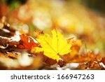maple leaves in park  close up | Shutterstock . vector #166947263