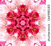Pink Concentric Flower Center...