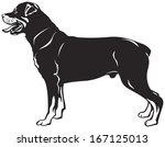 rottweiler dog breed vector...   Shutterstock .eps vector #167125013