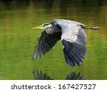 grey heron  gray heron ... | Shutterstock . vector #167427527