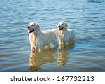 two dogs playing in the water | Shutterstock . vector #167732213