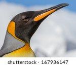 King Penguin Face And Beak In...