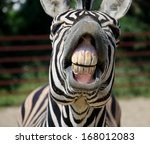 funny zebra open mouth and show ... | Shutterstock . vector #168012083