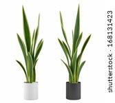 decorative grass plant in... | Shutterstock . vector #168131423