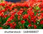 red flower | Shutterstock . vector #168488807