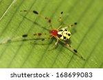 jumping spiders.  | Shutterstock . vector #168699083