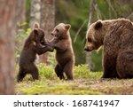 Eurasian Brown Bear  Ursos...