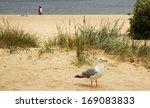 Walking Beach Seagull