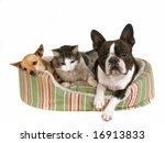 Stock photo two dogs and a kitten in a pet bed 16913833