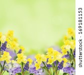 Background With Fresh Daffodil...