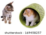 Stock photo little kittens isolated on white 169458257