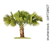 Small Palm Tree Isolated On...