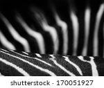 zebra stripes in black and... | Shutterstock . vector #170051927