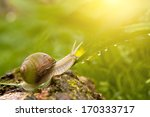 Dewy Grass And Snail