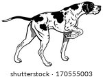 English Pointer Gun Dog Breed ...