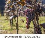 Vineyard In Ajara Region ...