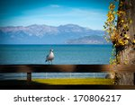 Seagull Perching On A Wooden...