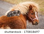 Stock photo two little tabby kittens sitting on the pony s back 170818697