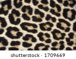 close up pattern of leopard skin   Shutterstock . vector #1709669