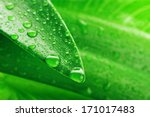 Green Leaf And Water Drop...