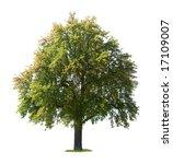 pear tree  pyrus communis ... | Shutterstock . vector #17109007
