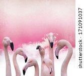Pink Flamingo Background