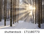 Sun And Snow In The Winter...