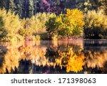 fall forest | Shutterstock . vector #171398063