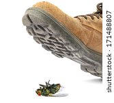 boot steps on a dead fly... | Shutterstock . vector #171488807