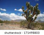 joshua tree forest  arizona usa