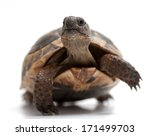 Turtles' Head's Up While...