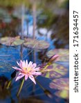 Small photo of Shot with lensbaby 'sweet 35' optic with the sweet spot on the waterlily. The beautiful bokeh created by the lens adds a Monet-esque painterly effect to the image.