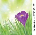 Vector Crocus Flower On Spring...