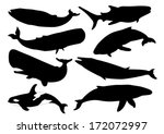 Set Of Whale Silhouettes. Vector