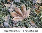 Frozen Leaf On Frozen Grass.