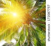 sunlight through the leaves of... | Shutterstock . vector #172087757