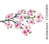 cherry blossom pink   violet ... | Shutterstock .eps vector #172142843