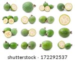 collection of feijoa acca... | Shutterstock . vector #172292537