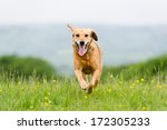 Stock photo i m coming 172305233