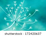 Natural Macro Floral Background