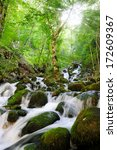 stream in green forest | Shutterstock . vector #172609367