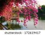 Flowers In Chinese Park....