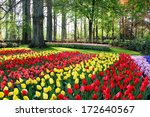 Mix Of Holland Tulips And...
